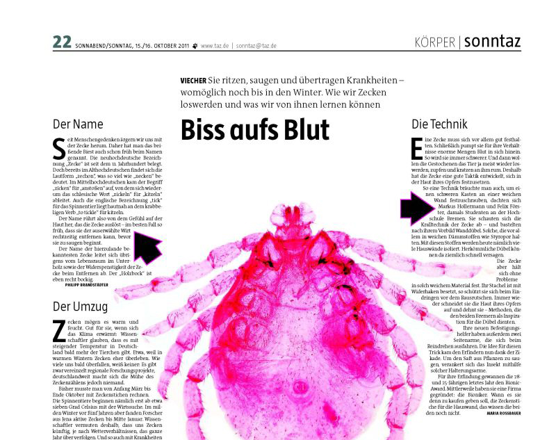 Biss-aufs-Blut Cut in <!--:de-->presse<!--:--><!--:en-->Press<!--:-->